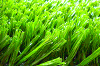 Artificial lawn grass turf