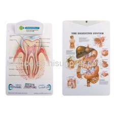 Medical Anatomical Chart Clipboard