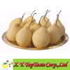 Chinese fresh ya pear,Nashi pear,asian pear of 2011