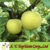 Chinese fresh Nashi pear,ya pear,asian pear of 2011 crop