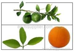 Bitter Orange P.E ./ Citrus Aurantium P.E.Synephrine