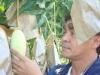 mango paper product