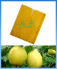 pear paper product