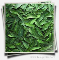 Aromatherapy Eucalyptus Oil