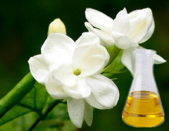 Jasmine Essential Oil 100% pure and natural