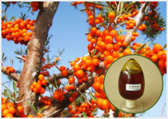 Co2 Extracted Seabuckthorn Seed Oil
