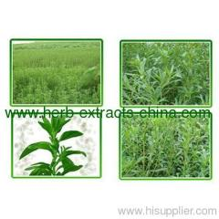 Stevia Leaves Extract Powder