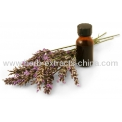 Lavender Oil manufacturer factory