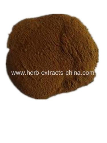 Angelica Extract manufacturer factory