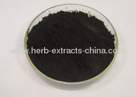 Bilberry Extract Manufacturer Factory