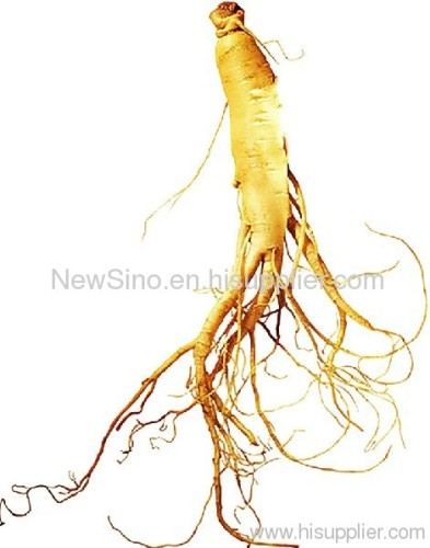 Ginseng Root Powder Extract -- Ginseng Root P.E.
