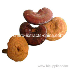Ganoderma Lucidum Shell-Broken Spore Powder
