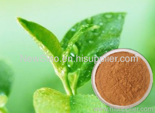 100% natural Green Tea Polyphenols manufacturer factory