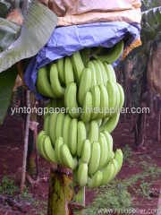 banana paper bags