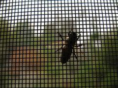 window screen wire netting