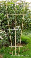 bamboo trellis bamboo supports