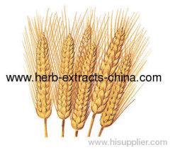 CAS 8006-95-9 Triticum Aestivum Light Yellow Wheat Germ Oil