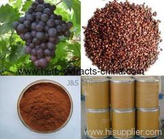 Procyanidin 98% High OPC Grape Seed Extract