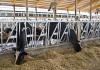 cattle equipment cattleheadlocks dairy headlocks IN-M084