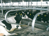 cattle equipment cattle free stall dairy equipments IN-M112