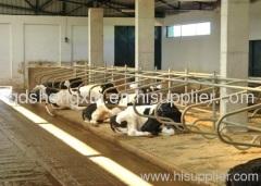 Cow equipamentos Stall grátis