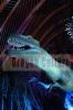 robotic dinosaur,theme park,zigong manufacturers