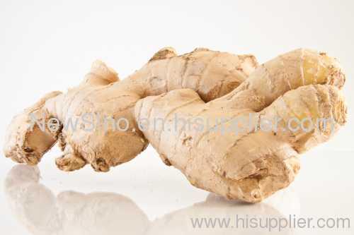 BP Pharm Grade Ginger Essential Oil as Anti-arthritis