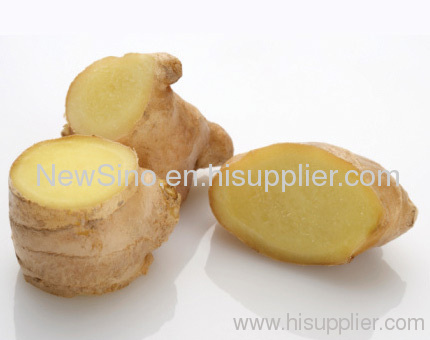 China Therapeutic Natural Refined Ginger Root Essential Oil