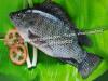 China Frozen Black Tilapia Fish (Oreochromis Niloticus/Oreochromis Mossambicus)