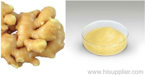 5% Gingerol Powder Ginger Extract