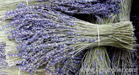 China Typy Natural Processing Lavandula Augustifola Essentia