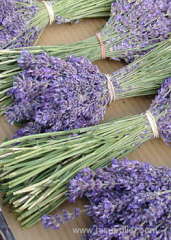 China Lavandula augustifolia essential Oil