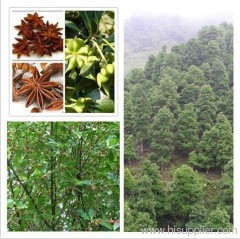 Pure Natural Essential Oil from Anise Seed