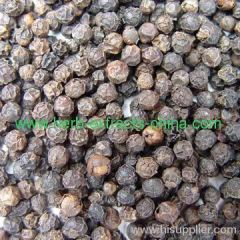 Antiseptic Antispasmodic unripe berries of Black Pepper esse