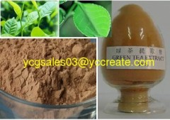 Green Tea P.E.; Tea Polypherals 80%; Standard Herbal Extract
