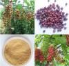 Schisandra Chinensis P.E.; Schisandrins ; Herbal extract