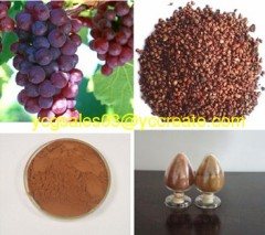 Grape Seed P.E. ; Proanthocyanidin ; Herbal extract