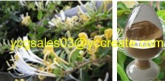 HoneySuchle Flower P.E.; Chlorogenic Acid ; Herbal extract