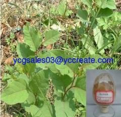 Polygonum Cuspidatum P.E.; Resveratrol