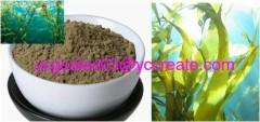 Bladderwrack Seaweed Kelp Extract, Iodine