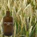 Refined Natural Cold Pressed Golden Yellow Wheatgerm Oil