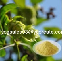 Hops Flower Extract, Xanthohumo