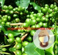 Green Coffee Bean Extract, Chlorogenic Acid