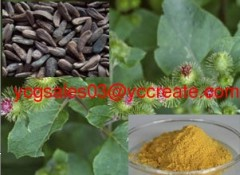 Burdock Seed Extract, Power 40% Arctiin