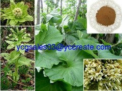 Butterbur Extract 10:1