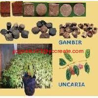 Gambir extract