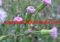Emilia Herb Extract, alkaloids flavonoids