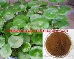 Gotu Kola P.E. / Centella asiatica Extract