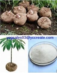 Konjac Flour Extract, 90% Glucomannan