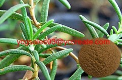 Rosemary extract, Carnosic acid